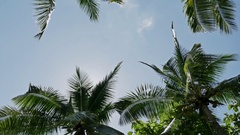Palms Underneath Coco Sky View Tropic 4k Stock Footage