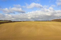 Newly sown wheat crop Stock Photos