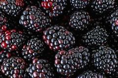 Blackberries Stock Photos
