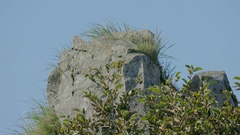 Close Shot of a Rock with Vegetation Overgrowth Stock Footage