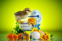 Little chick with daisies Stock Photos