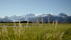 Mountains with Unfocused Weeds in Foreground Stock Footage