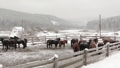 Horses on a farm in winter at farm Stock Footage