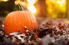 Big orange pumpkin with fall leaves at sunset Stock Photos