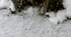 Large Snow Flakes Hitting the Ground - Snowing Stock Footage