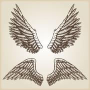 Hand drawn vector vintage illustration - naturalistic spread wings sketch Piirros
