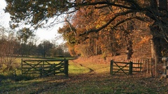 Nature scenic country parkland landscape Stock Footage