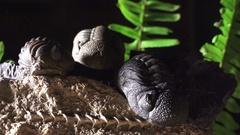 Life beneath the sea, Prehistoric life forms trilobites Stock Footage