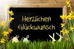 Sunny Narcissus, Egg, Bunny, Herzlichen Glueckwunsch Means Congratulations Stock Photos