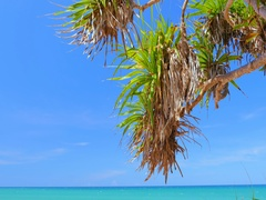 Leaves of tropical tree plant on sea coast beach of exotic island at summer  Stock Footage