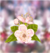 Cherry Blossom, Blur Nature Background Stock Illustration