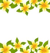 Decoration frame made in frangipani (plumeria), ornament with exotic flower.. Stock Illustration