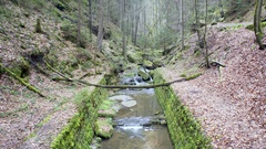 Water flows in river creek in lush green forest, Germany Stock Footage