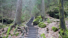 Stairs lead into a lush green forest path, Germany Stock Footage