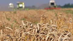 Wheat and harvesters Stock Footage