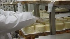 Production of homemade goat cheese Stock Footage