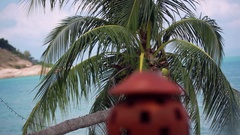 Merry Christmas text from the tropical beach. 1920x1080 Stock Footage