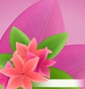 Illustration pink and red frangipani (plumeria), exotic flowers green leave.. Stock Illustration