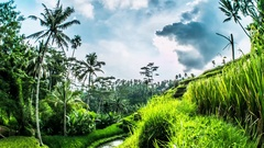 Tegalalang Clouds Rice Terraces Bali Timelapse 4k Stock Footage
