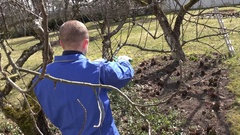 Skilled gardener trimming the branches of apple tree in early spring. Hand shot Stock Footage