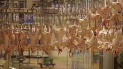 Production Process of Chickens in a Slaughterhouse Stock Footage