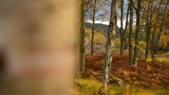 Peaceful forest timelapse of autumn foliage Stock Footage