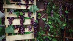 Light turning off and on in room with boxes of artificial grapes with leaves. Stock Footage