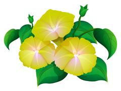 Morning glory in yellow color Stock Illustration
