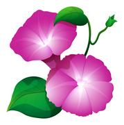 Pink morning glory flower with green leaves Stock Illustration