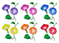 Different colors of morning glory flowers Stock Illustration