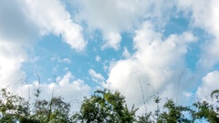 Motion white clouds over bamboo tree. Stock Footage