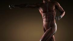 Human Muscle Anatomy Stock Footage