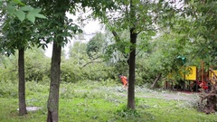 Worker and people among broken branches and big tree falling to car Stock Footage