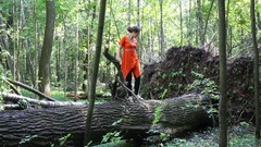 Woman in orange dress going on big fallen tree to root and looking it Stock Footage