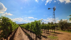 Brunello Montalcino vineyard landscape with old-style windmill in Tuscany, Italy Stock Footage