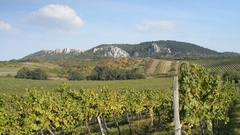 Vineyards, Palava region, Moravia, Czech Republic, EU, Europe. Stock Footage