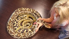 Blonde woman touching head of snake lying around small snake on table. Stock Footage