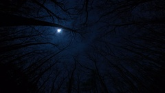 Moon passing above winter trees fog wide angle fisheye time lapse looking up 4k Stock Footage