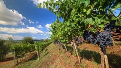 Brunello di Montalcino vineyard landscape in autumn, Tuscany, Italy Stock Footage