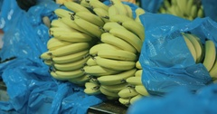 Man cutting a banana cluster to small portions in a packing house Stock Footage