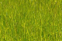 Green grass. Lake Baikal, Siberia, Russian Federation. Stock Photos