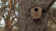 Birdhouse on the trunk of the tree weighs Stock Footage
