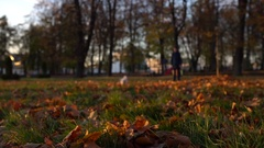 Funny puppy. Cute bichon dog run through autumn park with full of fallen lives Stock Footage