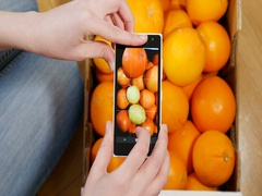 Above view Woman taking on smartphone photographs of French oranges and lemons Stock Footage