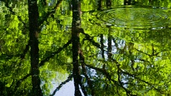 Surface of Forest Pond HD Pro Stock Footage
