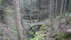 Bridge path, rocks with moss in lush green forest Stock Footage