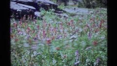 1972: a clearing in a forest covered in different types of wild flowers Stock Footage