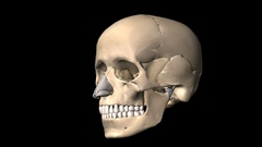 Skull Rotates on a Transparent Background, Animation Stock Footage