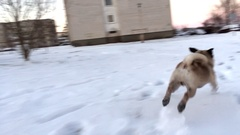 Funny dog playing in winter park Stock Footage
