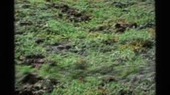 1977: a creature's dwelling dug into the ground in a grassy field ALASKA Stock Footage